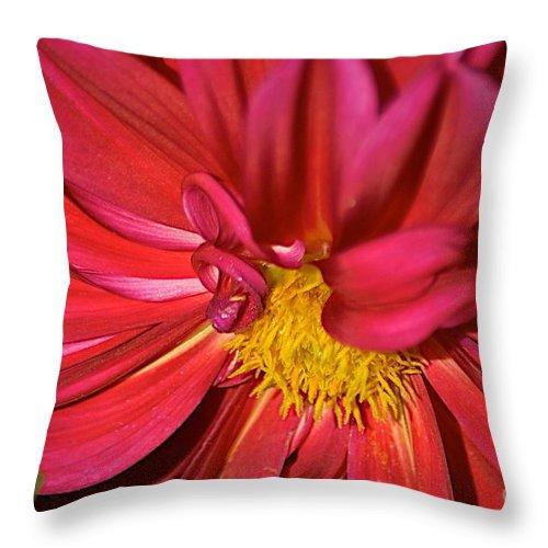 Dahlia Throw Pillow featuring the photograph Design by Joseph Yarbrough