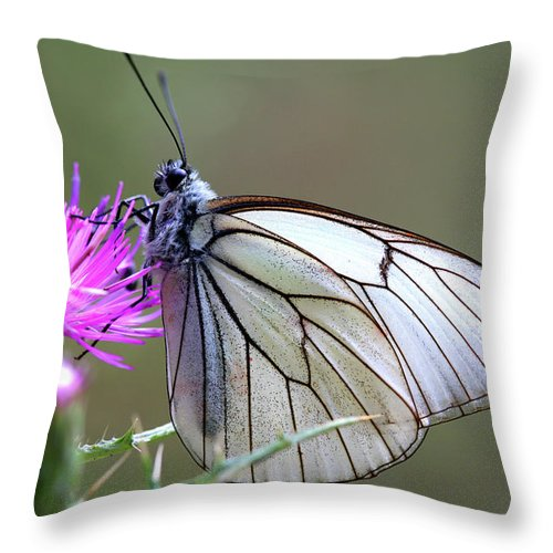 Wildlife Throw Pillow featuring the photograph Detail Of A Butterfly In Alto Tajo by David Santiago Garcia