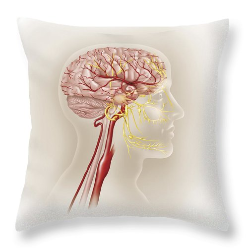 Square Image Throw Pillow featuring the digital art Detail Of Ateries Of The Human Head by TriFocal Communications