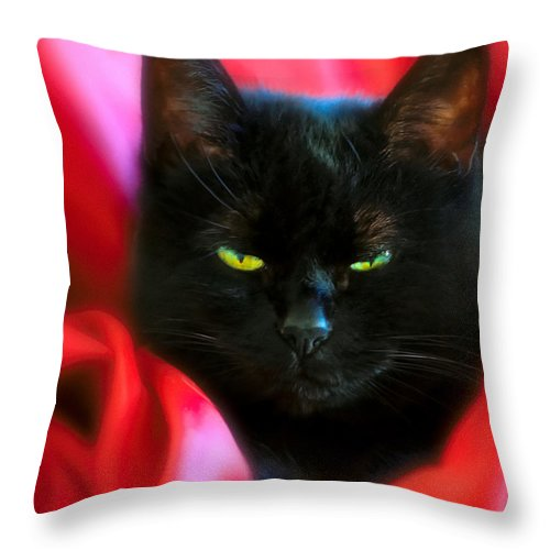 Black Cat Throw Pillow featuring the photograph Devil In A Red Dress by Bob Orsillo