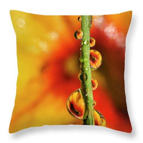 Macro Throw Pillow featuring the photograph Dew Droplet Fractals by Arthur Fix