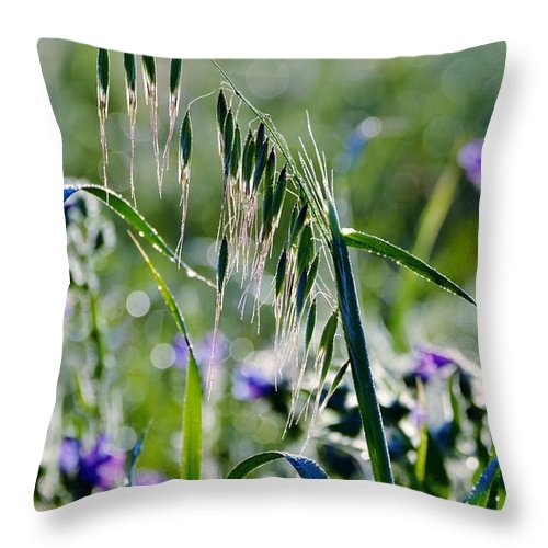 Landscape; Rape Field; Sunrise; Background; Swartland; Nature; Plants; Rural; Yellow; Green; Dew; Drops; Throw Pillow featuring the photograph Dew Drops On Grass by Werner Lehmann