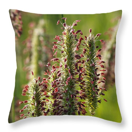 Grass Seeds Throw Pillow featuring the photograph Dew On The Grass by Kathleen Bishop