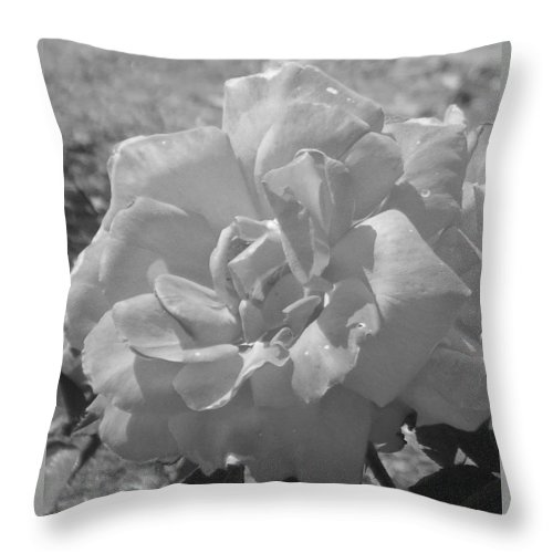 Rose Throw Pillow featuring the photograph Dew Rose by Pharris Art