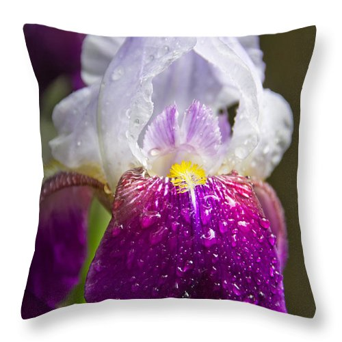 Dewy Iris Throw Pillow featuring the photograph Dewy Iris by Jemmy Archer