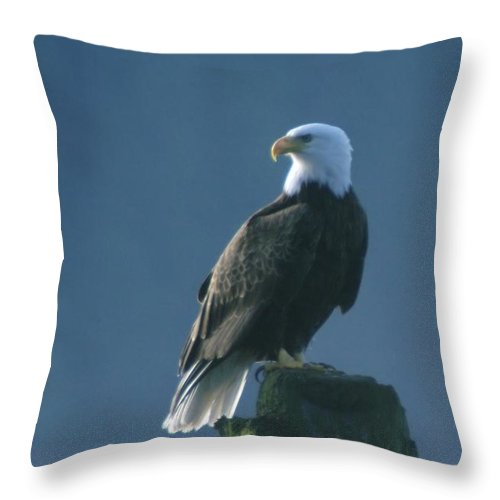 Eagles Throw Pillow featuring the photograph Dignity by Jeff Swan