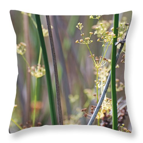 Dill Throw Pillow featuring the photograph Dilly by Jean Booth