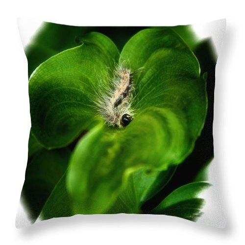 Caterpillar Throw Pillow featuring the photograph Dinner Is Served by Lucy VanSwearingen