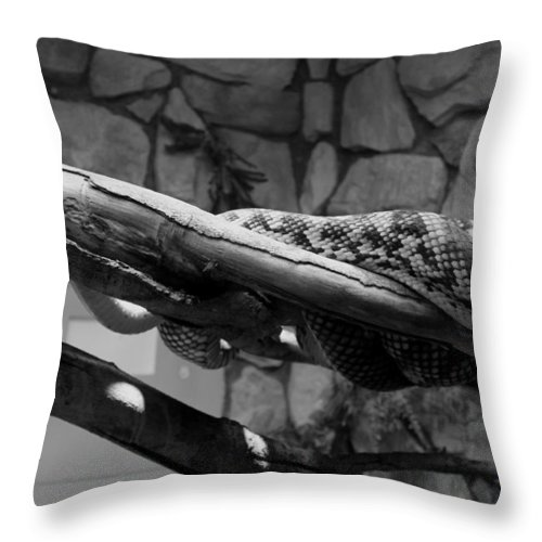 Snake Throw Pillow featuring the pyrography Dinner Time by Kayla Benjamin