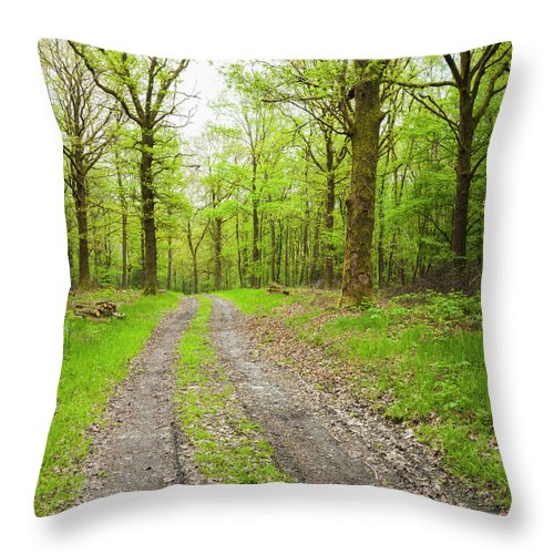 Scenics Throw Pillow featuring the photograph Dirt Road Surrounded By Trees In by Mike Kemp Images