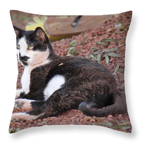 B And W Throw Pillow featuring the pyrography Dirty Bella by Jennifer E Doll
