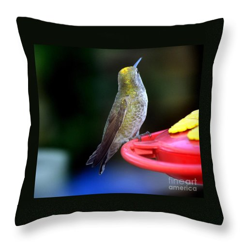 Hummingbird Throw Pillow featuring the photograph Display Of Colors by Jay Milo