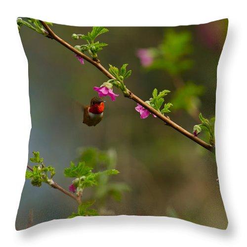 Hummingbird Throw Pillow featuring the photograph Distant Hummingbird by Tikvah's Hope
