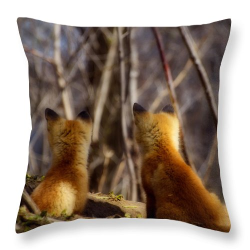 Kit Fox Throw Pillow featuring the photograph Distracted by Thomas Young