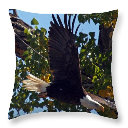 Colorado Throw Pillow featuring the photograph Diving by Bob Hislop