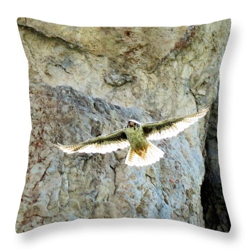 Prairie Throw Pillow featuring the photograph Diving Falcon by Darcy Tate