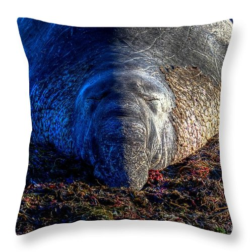 San Simeon Throw Pillow featuring the photograph Do Not Disturb by James Anderson