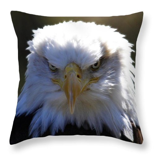Bald Eagle Throw Pillow featuring the photograph Do You Feel Lucky? by Steve McKinzie