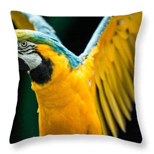 Gold Throw Pillow featuring the photograph Do Your Exercise Daily Blue And Yellow Macaw by Eti Reid