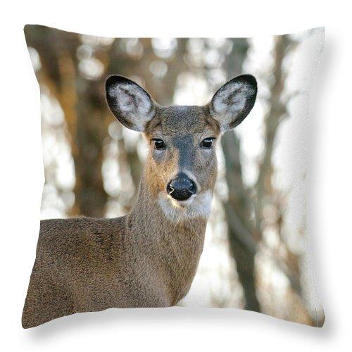 Doe Throw Pillow featuring the photograph Doe A Deer A Female Deer by Lara Ellis
