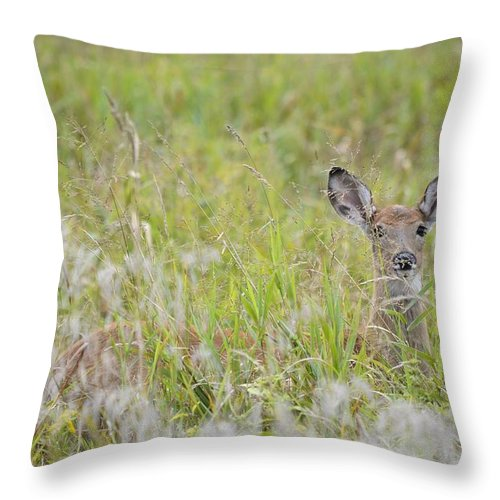 Doe Throw Pillow featuring the photograph Doe Radar by Bonfire Photography