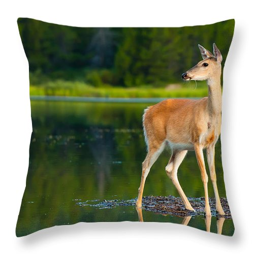 Animal Throw Pillow featuring the photograph Doe by Sebastian Musial
