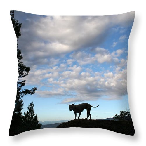 Dog Throw Pillow featuring the photograph Dog And Sky by Peggy Collins