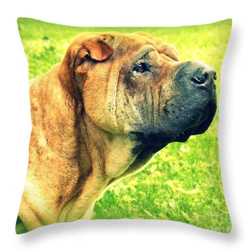 Dog Throw Pillow featuring the photograph Dog Days by Linda Galok
