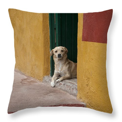 Guanajuato Throw Pillow featuring the photograph Dog In Colorful Mexican City by John Shaw