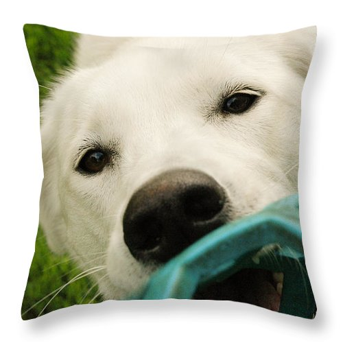 Dog Throw Pillow featuring the photograph Dog Playing With Blue Ball by Sophie Gravel