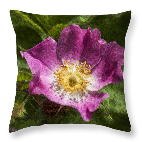 Dog Rose Throw Pillow featuring the photograph Dog Rose Textured by Steve Purnell
