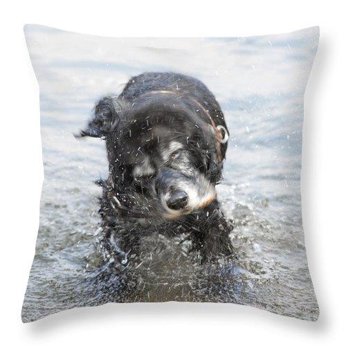 Dog Throw Pillow featuring the photograph Dog Shake by Mats Silvan