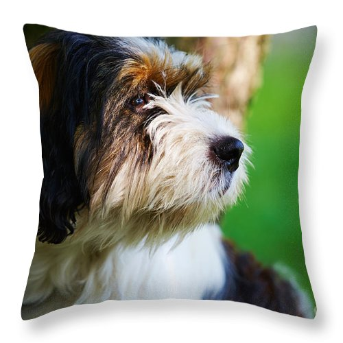 Staring Throw Pillow featuring the photograph Dog Sitting Next To A Tree by Nick Biemans