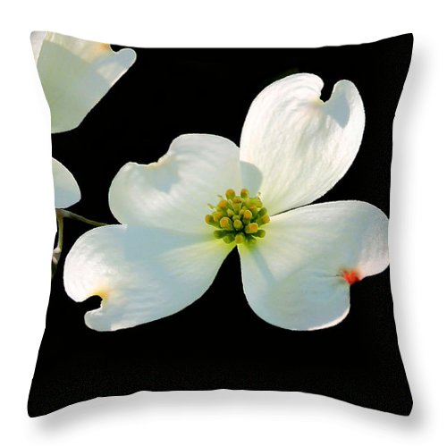 Dogwood Blossoms Throw Pillow featuring the photograph Dogwood Blossoms Painted For Jerry by Kristin Elmquist