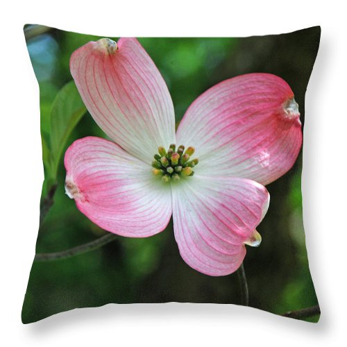 Dogwood Throw Pillow featuring the photograph Dogwood Blosssom by Richard Bryce and Family