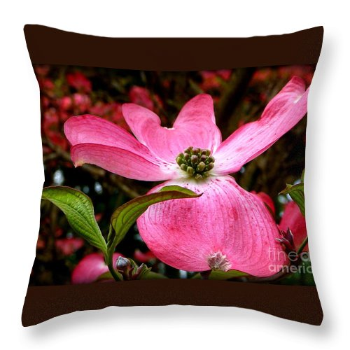 Flowering Plants Throw Pillow featuring the photograph Dogwood Shows Pink by Susan Garren