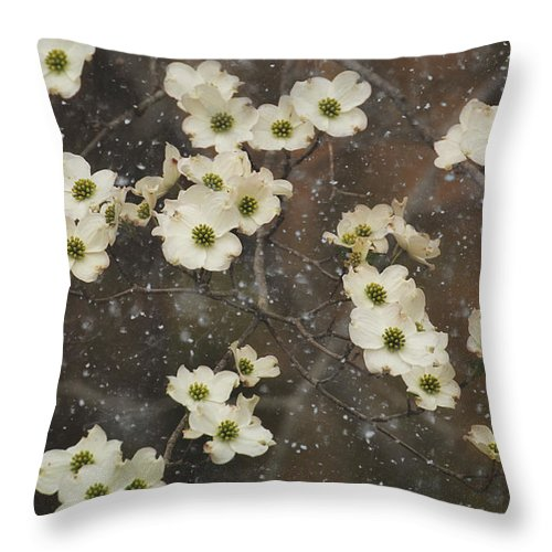 Dogwood Trees Throw Pillow featuring the photograph Dogwood Winter by Mel Hensley