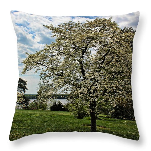 Dogwood Throw Pillow featuring the photograph Dogwoods In Summer by Judy Vincent