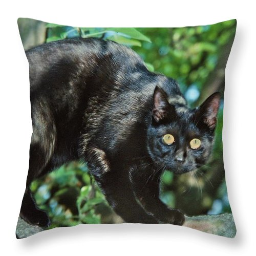 Cats Throw Pillow featuring the photograph Cat by Manfred Lutzius