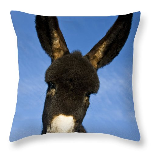 Grand Noir Du Berry Throw Pillow featuring the photograph Donkey Foal by Jean-Louis Klein and Marie-Luce Hubert