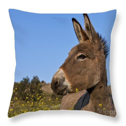 Donkey Throw Pillow featuring the photograph Donkey In Greece by Jean-Louis Klein and Marie-Luce Hubert