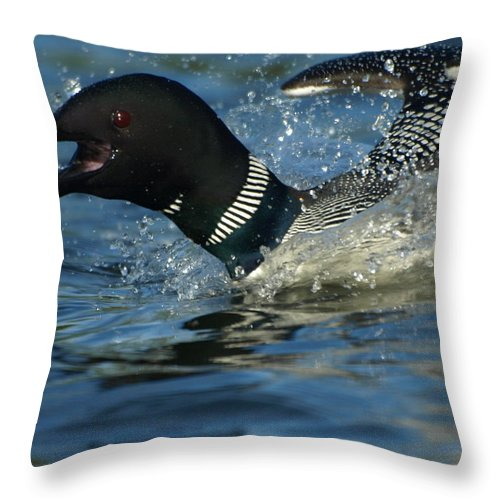 Peterson Nature Photography Throw Pillow featuring the photograph Don't Mess With Mom by James Peterson