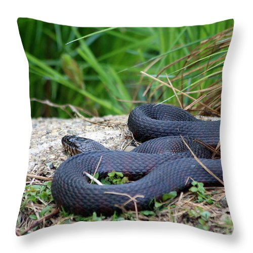Northern Throw Pillow featuring the photograph Dont Tread On Me by Kenny Glotfelty