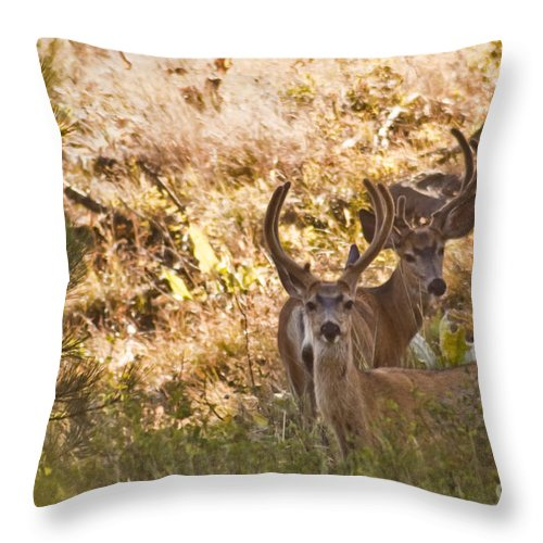 Buck Throw Pillow featuring the photograph Double by Andrea Goodrich
