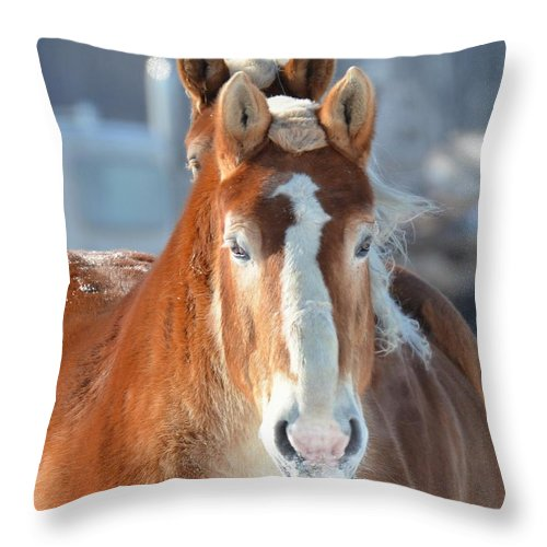 Horse Throw Pillow featuring the photograph Double Stare by Regine Brindle