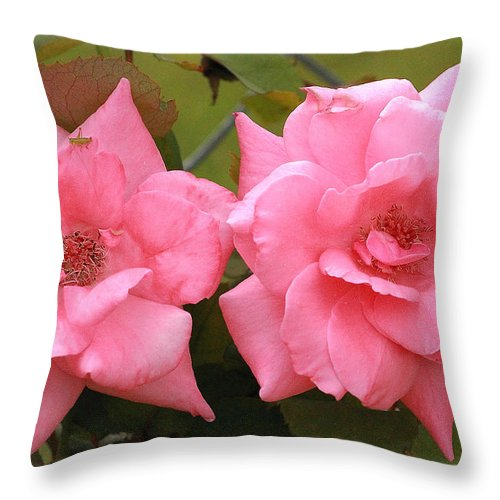 Pink Throw Pillow featuring the photograph Double Take by Karen Beasley