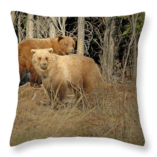 Grizzly Throw Pillow featuring the photograph Double Trouble by Dyle  Warren