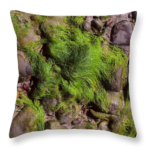 Dingle Peninsula Throw Pillow featuring the photograph Down By The Seaside by Cynthia Wallentine