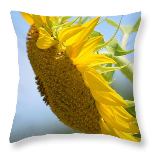 Downcast Sunflower Throw Pillow featuring the photograph Downcast Sunflower by Maria Urso