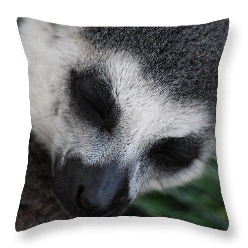 Lemur Throw Pillow featuring the photograph Dozing by Breanna Calkins